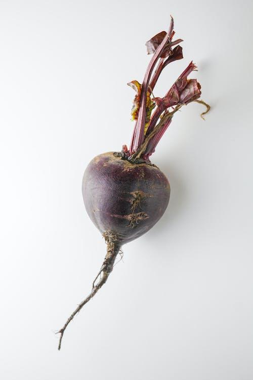 Gratis arkivbilde med fiolett, gårdsdrift, gårdsprodukter, grønnsak