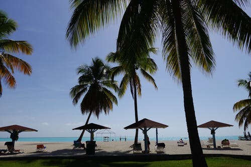 Gratis stockfoto met antigua, bomen, caribbean, palm