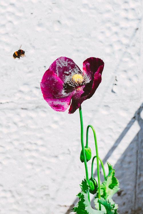 Gratis lagerfoto af bi, blomst, flora, kronblade