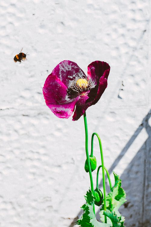 albină, floare, floră
