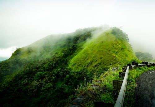 Foto stok gratis bukit, hijau abadi, lansekap berkabut, lereng