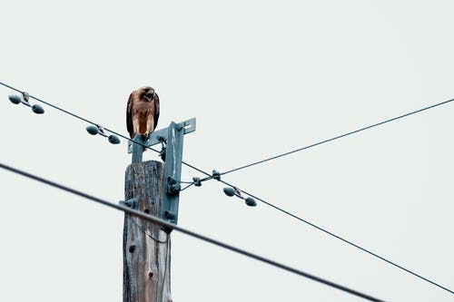 Základová fotografie zdarma na téma divočina, dráty, elektrické sloupy, elektrický stožár