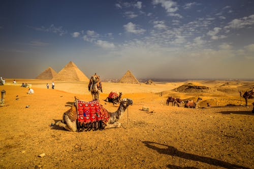 Camels at the site of pyramids