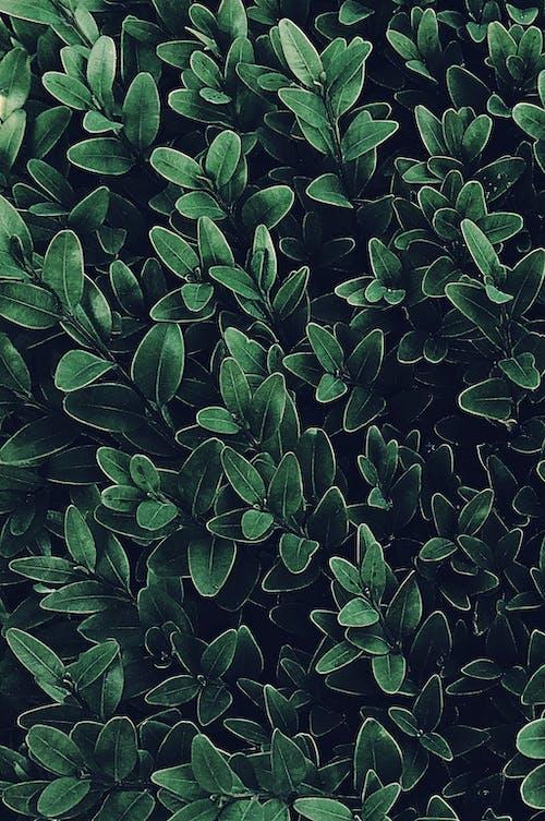 フローラ, 携帯壁紙, 緑の植物, 自然の無料の写真素材