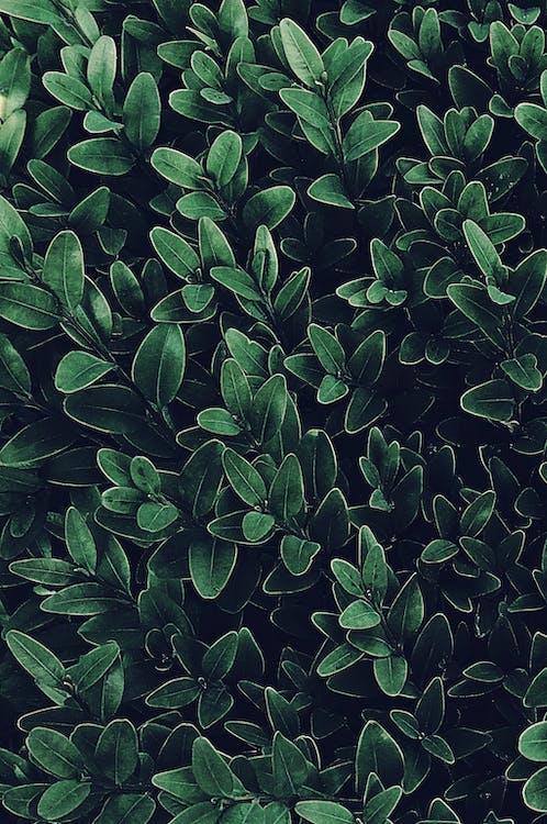 blade, farve, flora