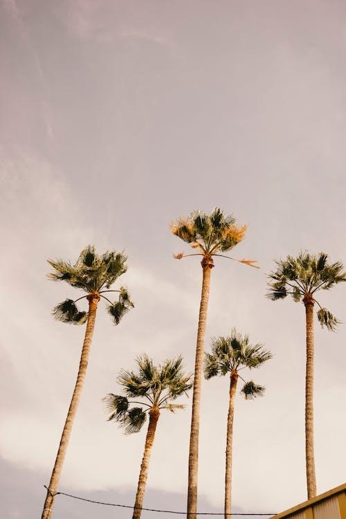 Základová fotografie zdarma na téma denní světlo, dovolená, exotický, kokosové palmy