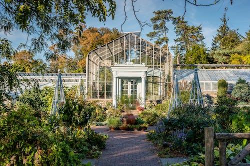 Gratis stockfoto met botanische tuin, groen, new york, park