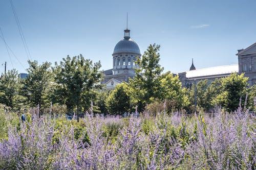 açık hava, ağaçlar, beton, bina içeren Ücretsiz stok fotoğraf