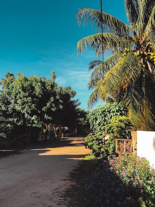 Imagine de stoc gratuită din arbori, cer senin, drum, frunze de palmier