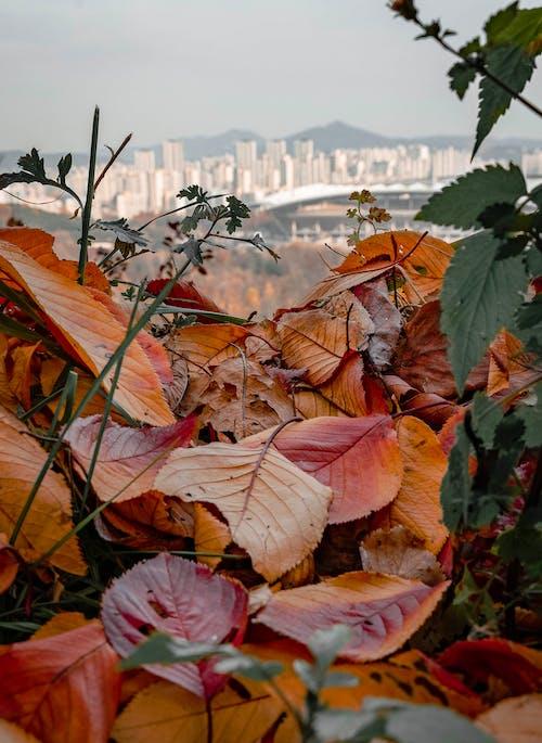 Free stock photo of autum, autumn leaves, autumn mood, colors of autumn