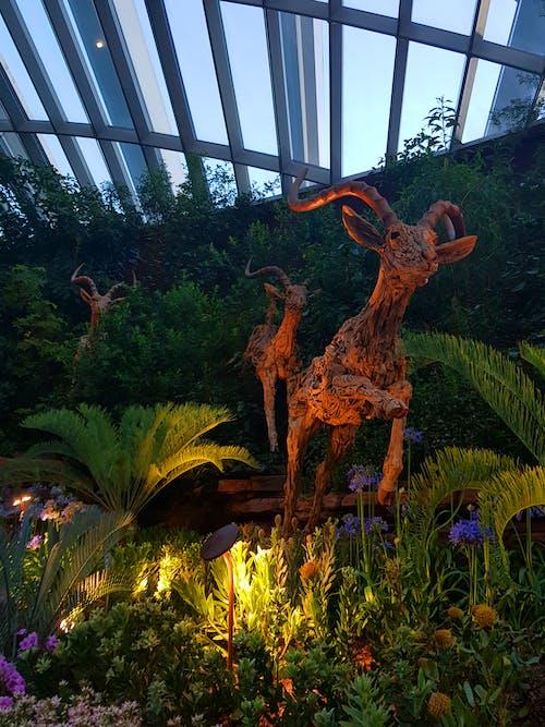 Imagine de stoc gratuită din grădină botanică, Singapore