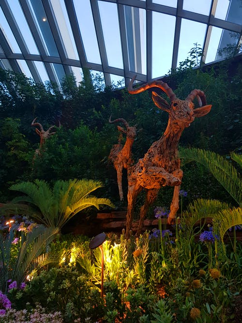 Free stock photo of botanical garden, singapore