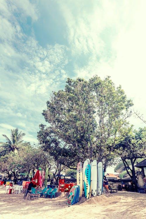 Foto d'estoc gratuïta de a l'aire lliure, arbres, assolellat, Bali