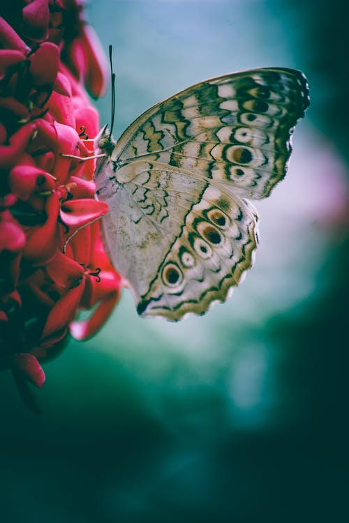 Selective-focus Photo of Butterfly Perching Pink Flower
