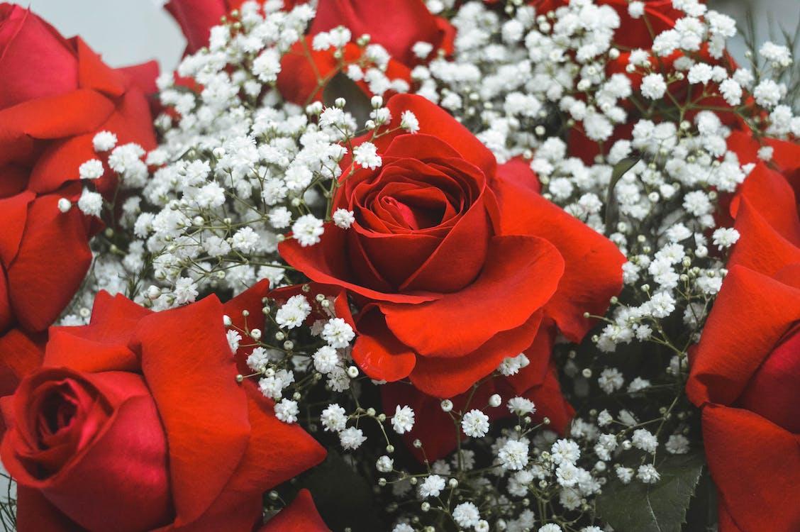 blomst, blomster, buketter