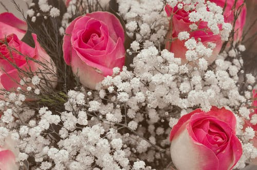 Free stock photo of bouquets, flower, flowers, pink