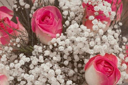 Foto profissional grátis de buquês, cor-de-rosa, flor, flores