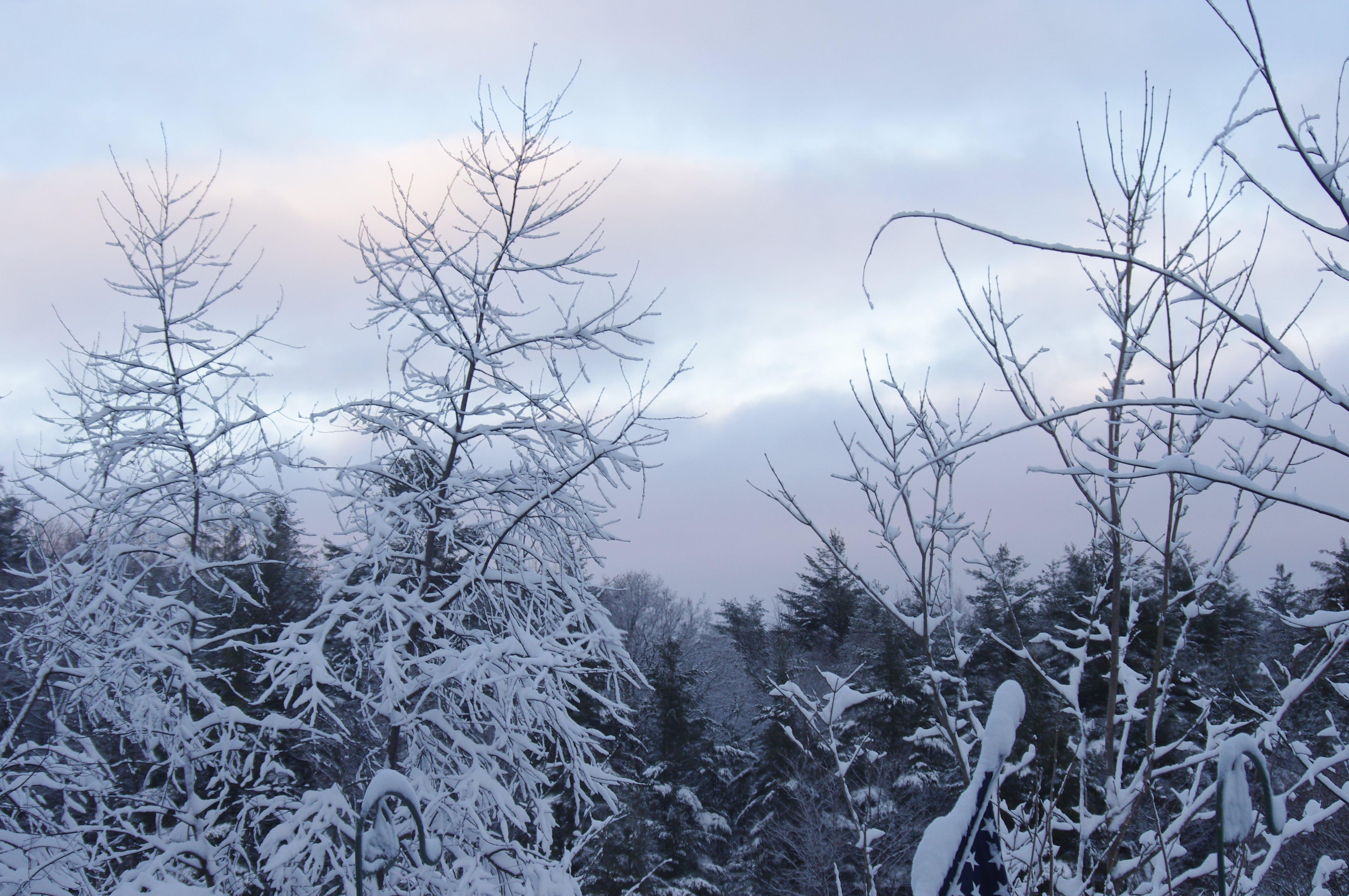 Free stock photo of nature, scenery, snow
