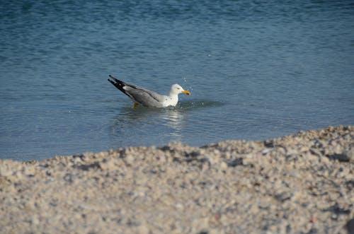 Fotobanka sbezplatnými fotkami na tému Chorvátsko, Jadranské more, krásny, modrá