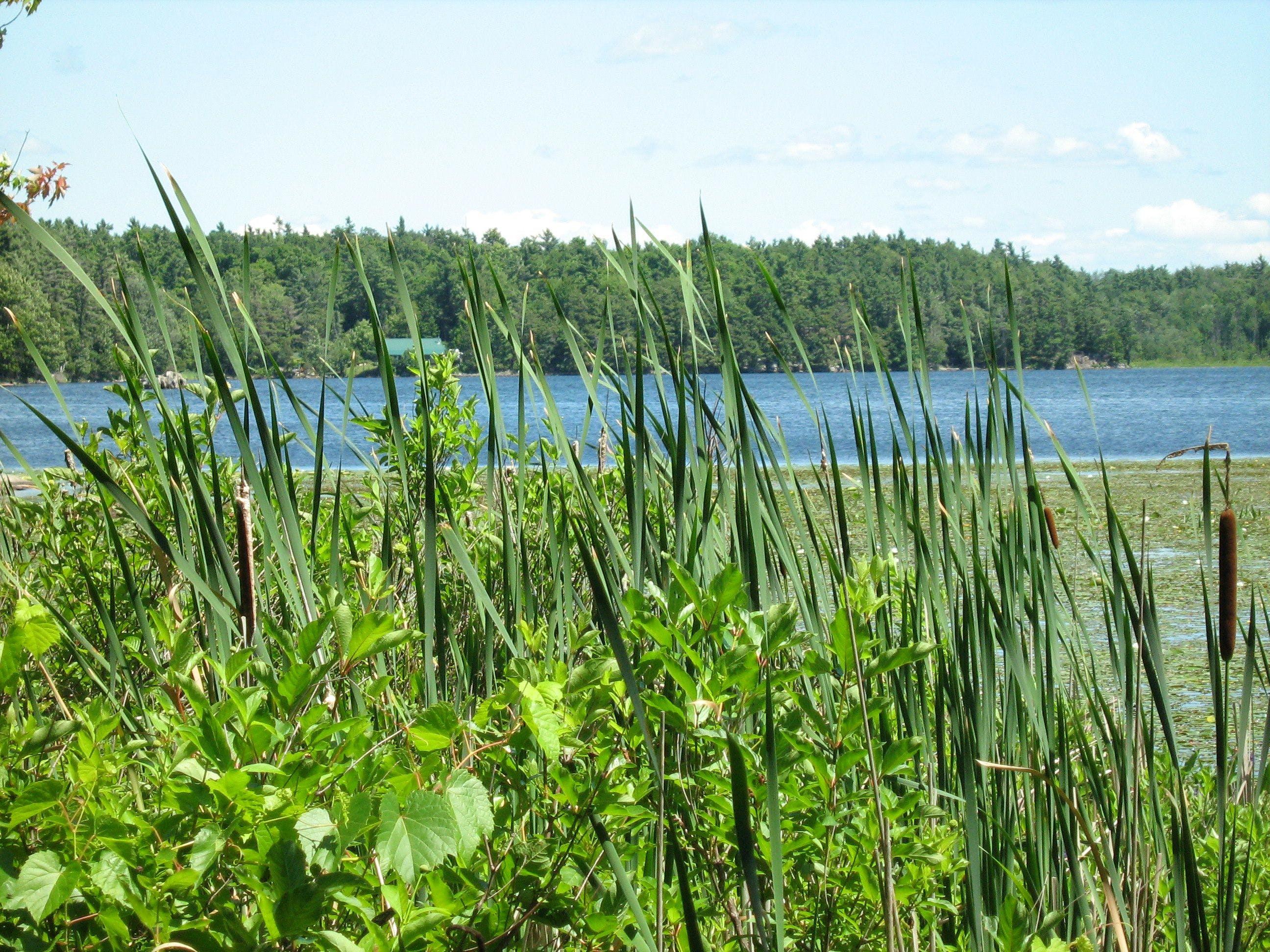 Free stock photo of lake, nature