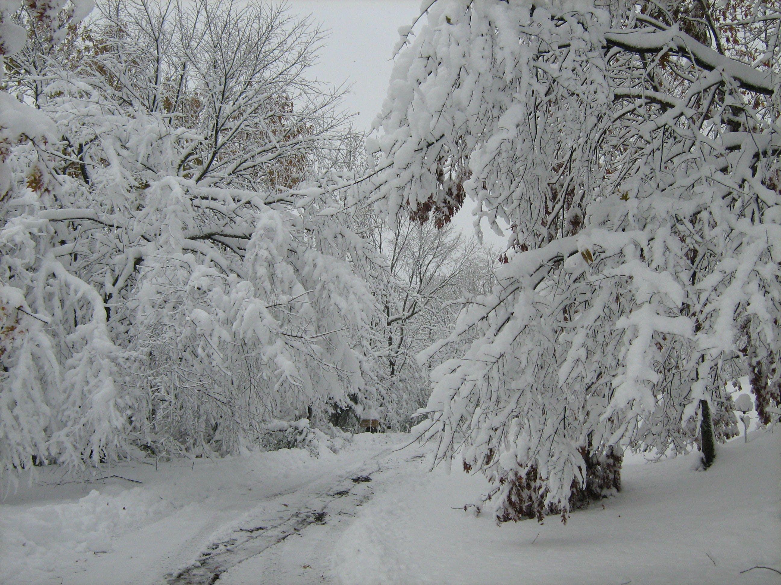 Free stock photo of nature, snow, winter