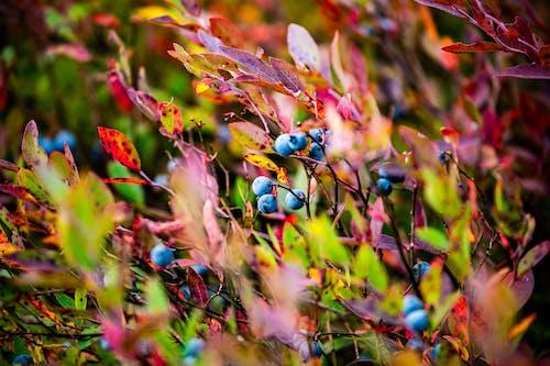 Immagine gratuita di fauna selvatica, frutta, natura, quebec