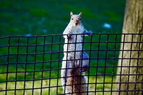 Immagine gratuita di new york, parco, scoiattolo