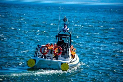 Immagine gratuita di balena, barca, canada, oceano