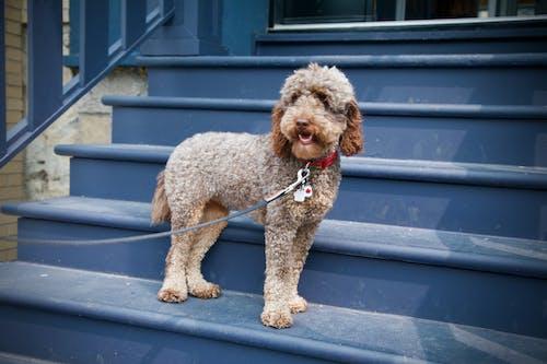 狗, 纵向, 街 的 免费素材照片