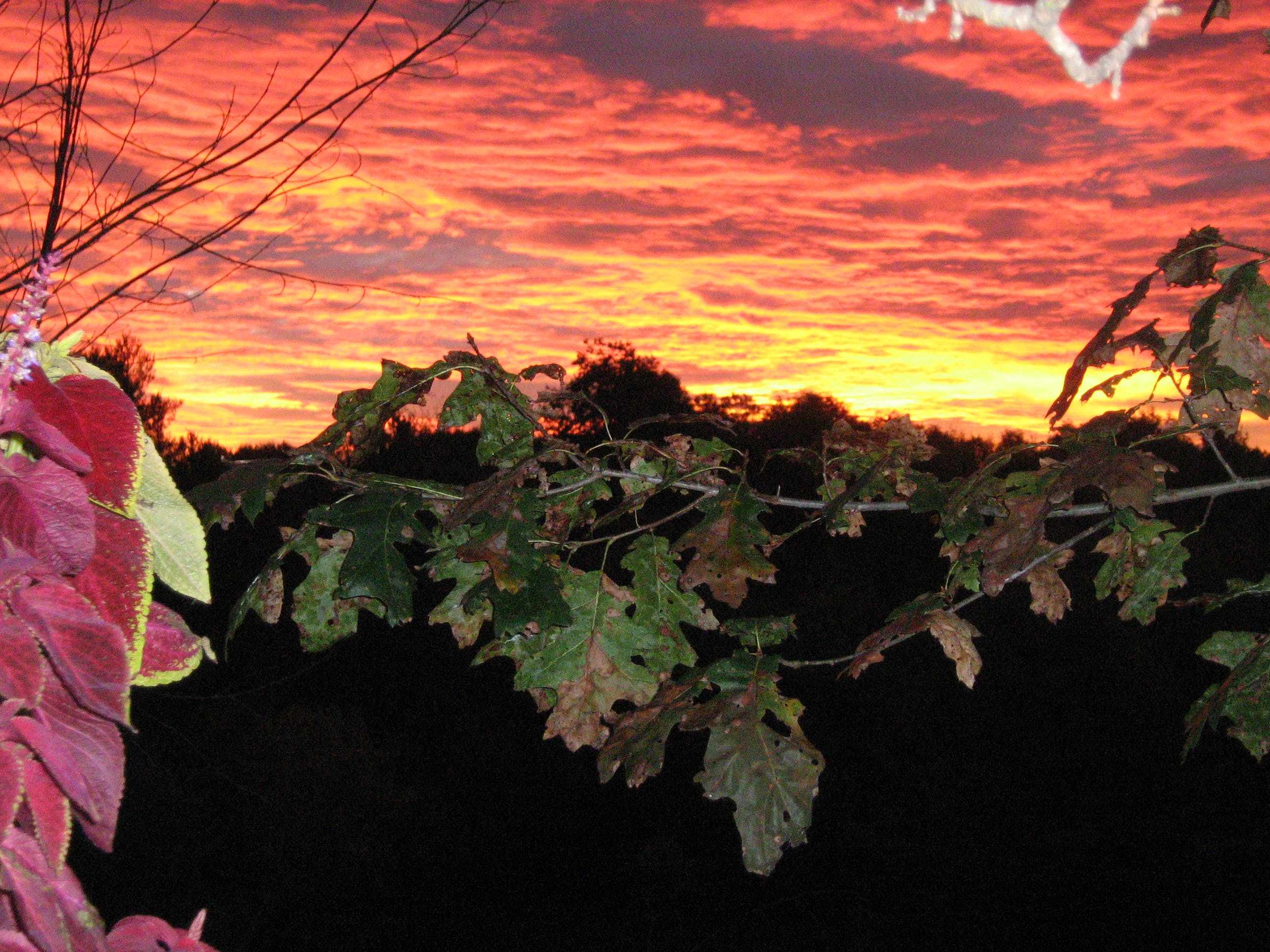 Free stock photo of Fiery Sunset, red sky, sky