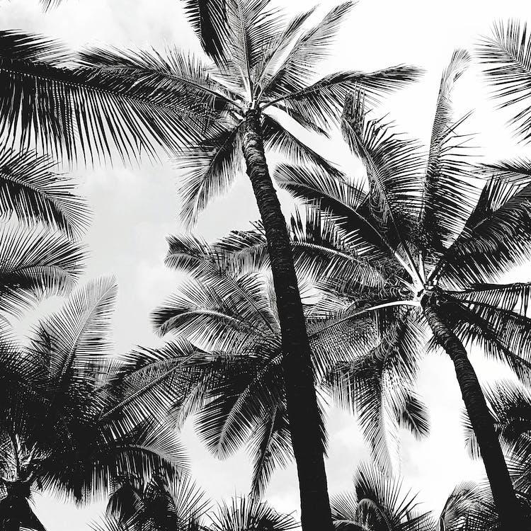 arbres, cel, coco
