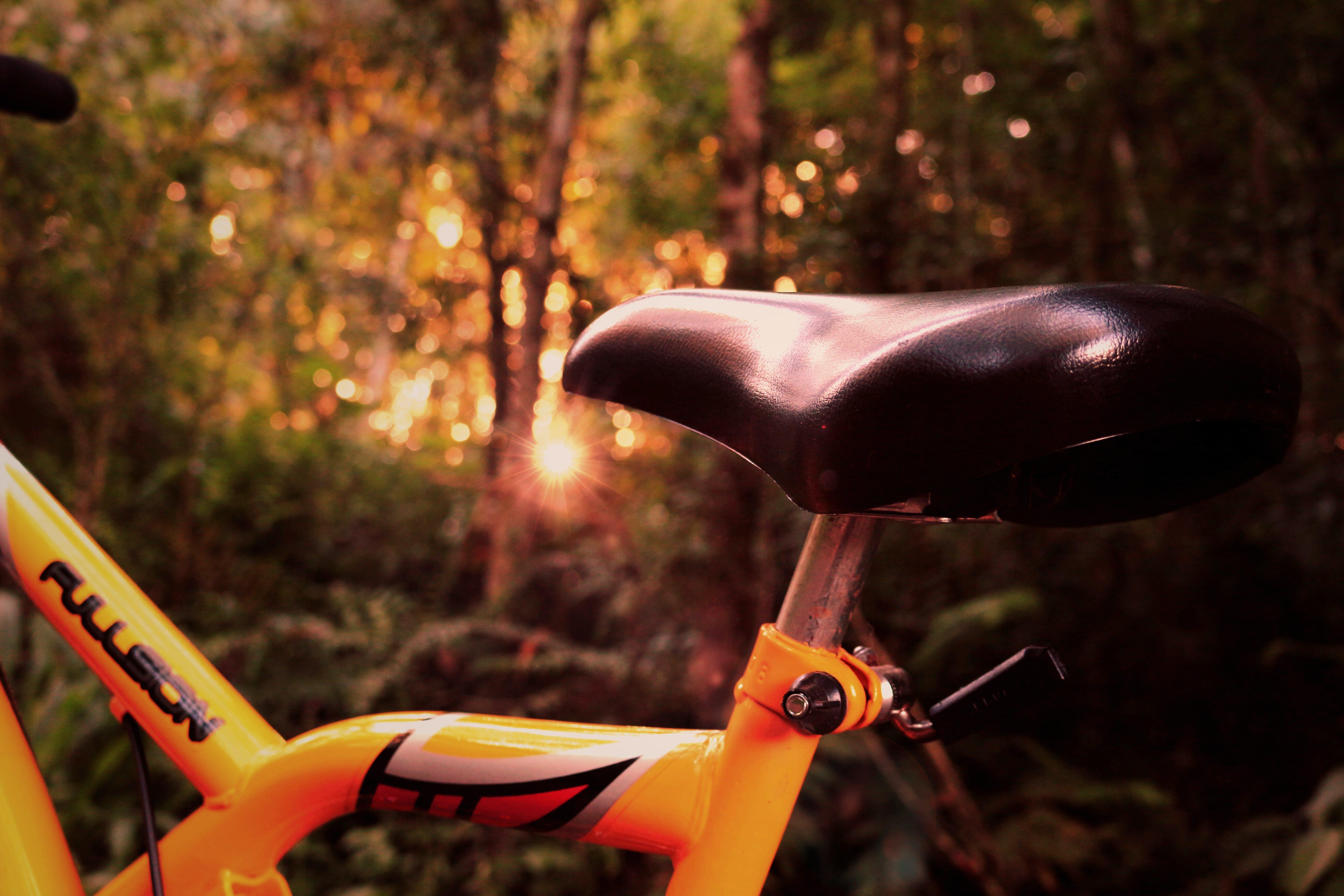 Kostenloses Stock Foto zu abenteuer, action, bäume, fahrrad