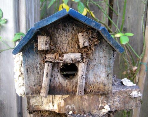 ağaç ev, Bahçe, kuş evi içeren Ücretsiz stok fotoğraf