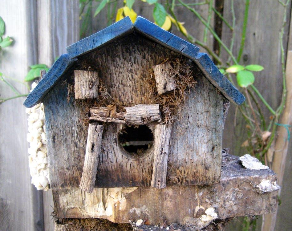 Free stock photo of birdhouse, fairy, garden