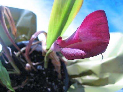 Free stock photo of flower, flower garden, flower pot
