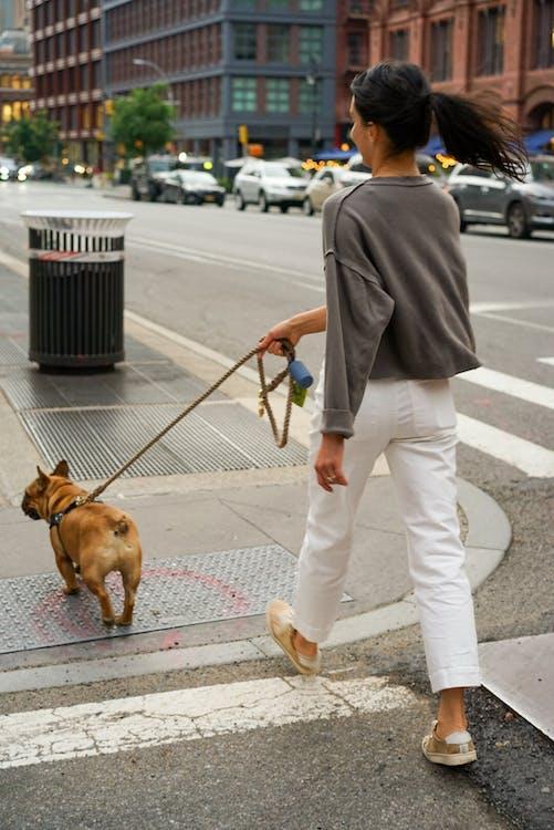 Woman Wearing White Pants Walking Brown Dog