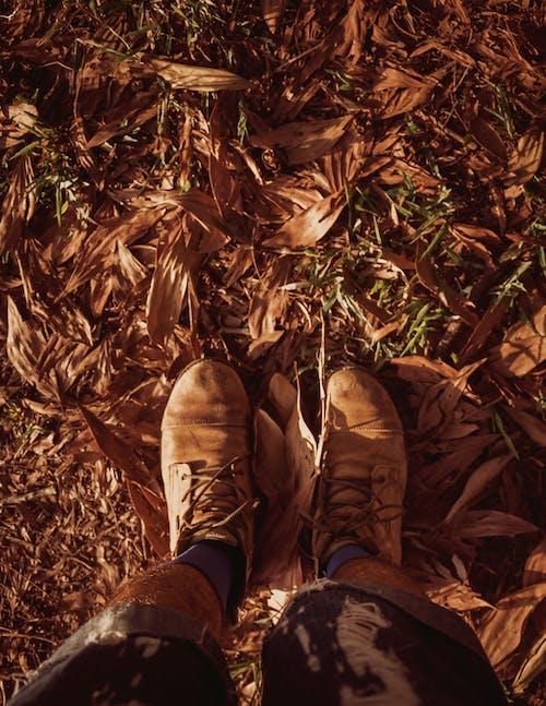 Darmowe zdjęcie z galerii z brązowy, buty, gleba, liście