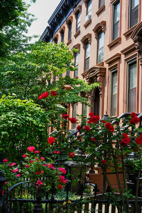 Free stock photo of brooklyn, brownstones, new york