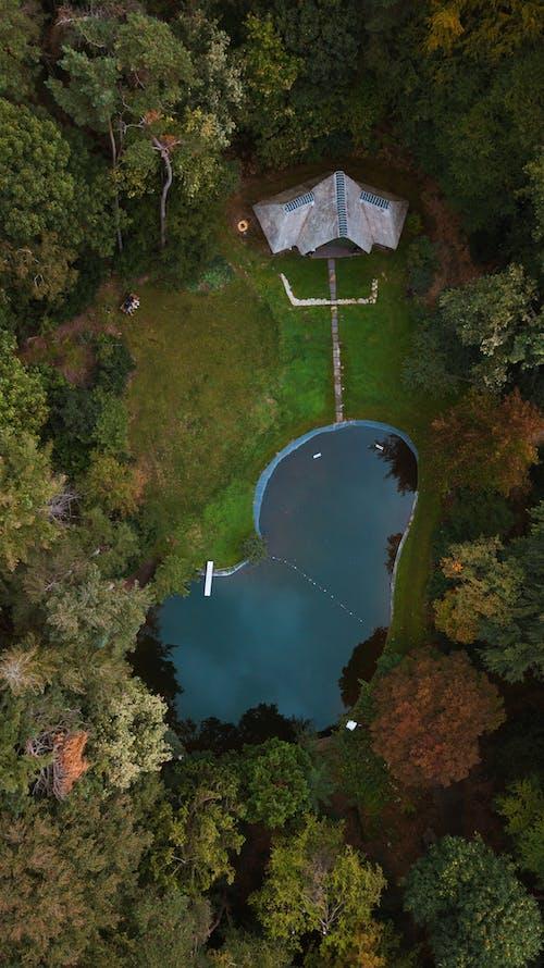 Foto d'estoc gratuïta de aigua, billar, bosc de tardor, casa amb piscina