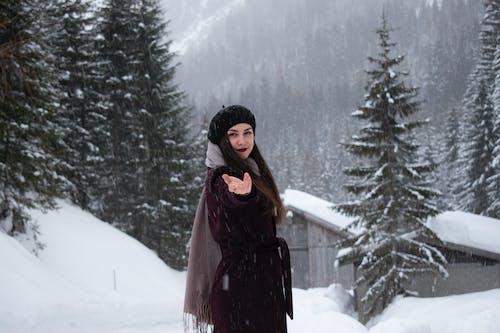 下雪的, 似雪, 冬季, 冬季景觀 的 免费素材照片