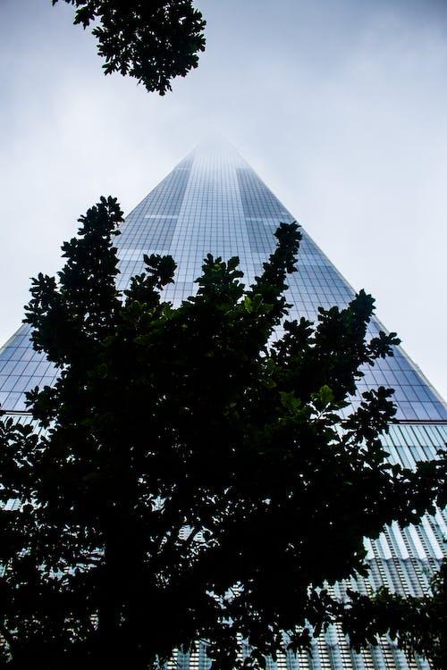ağaç, bakış açısı, bina, bina cephesi içeren Ücretsiz stok fotoğraf