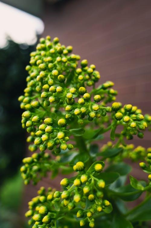 꽃봉오리, 나뭇잎, 노란색, 녹색의 무료 스톡 사진