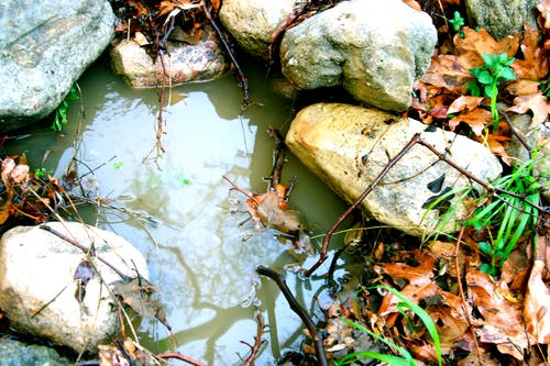 kayalar, Su, su birikintisi içeren Ücretsiz stok fotoğraf