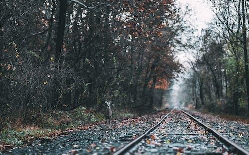 Безкоштовне стокове фото на тему «дерева, дика тварина, дикий, залізничної колії»
