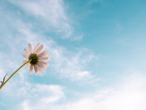 Darmowe zdjęcie z galerii z błękitne niebo, chmury, flora, kolor