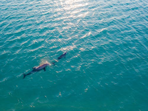 Foto profissional grátis de água, animais aquáticos, animais marinhos, delfins