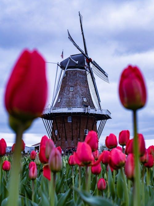 경치, 계절, 구름, 꽃의 무료 스톡 사진