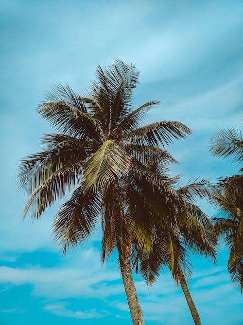 Gratis lagerfoto af blå himmel, ferie, idyllisk, kokostræer