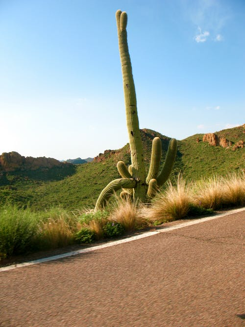 Foto stok gratis alam, Arizona, kaktus