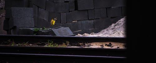 Gratis lagerfoto af byggemateriale, byggeri, fugl, togspor
